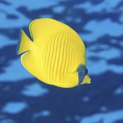 عکس ماهی آکواریوم