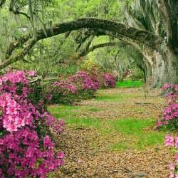 مناظر دیدنی و زیبا از طبیعت