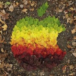 هنرنمایی بسیار زیبا با برگ های پاییزی