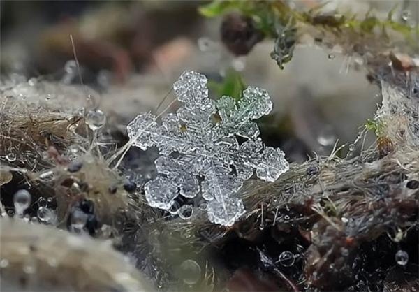 تصاویر یک لحظه پیش از آب شدن برف