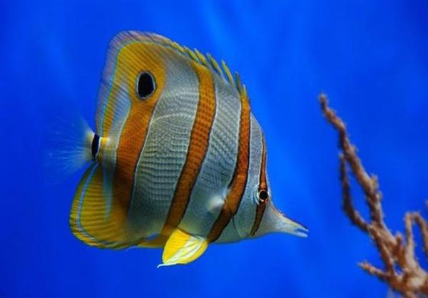 تصاویر زیبا از دنیای زیر آب