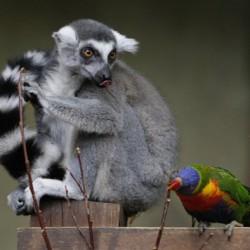 دوستیهای بسیار عجیب بین حیوانات