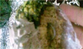 حلقه ازدواج قناد در شیرینی خامه ای / عکس