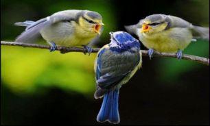 استفاده پرندگان از عطر در گذشته
