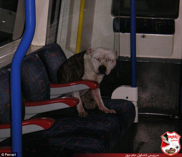 اتفاقی جالب و حیرت انگیز در مترو لندن + تصاویر