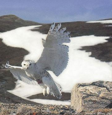 ۵ پرنده خطرناک را بشناسید + عکس