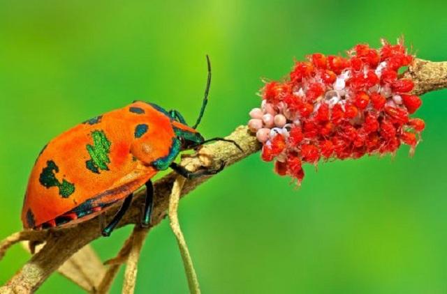 تصاویر فوق العاده زیبا از آبرنگی در دل طبیعت