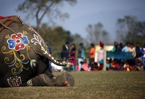 تصاویر: مسابقه فوتبال فیل ها