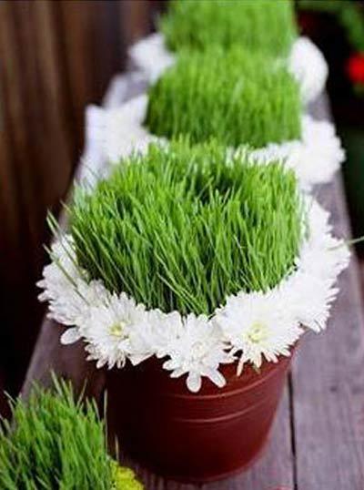 مدل جدید سبزه مخصوص عید نوروز امسال
