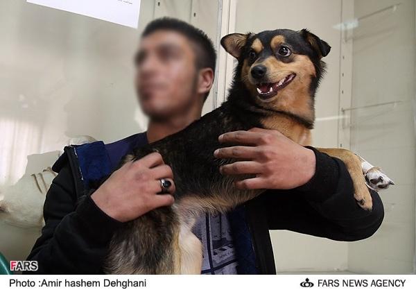 نگه داری سگ با هزینه های میلیونی در پایتخت + عکس