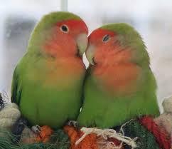 اگر کسی را دوست داری !
