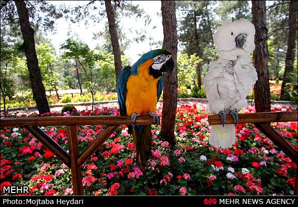 بزرگ ترین باغ پرندگان ایران