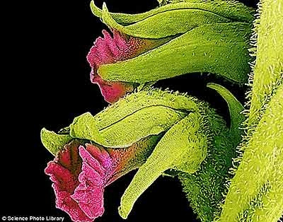 زیبایی پنهان گلها را با میکروسکوپ الکترونی ببینید