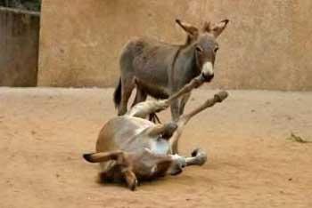 انواع خرها در حالت ها و ژست های مختلف – طنز