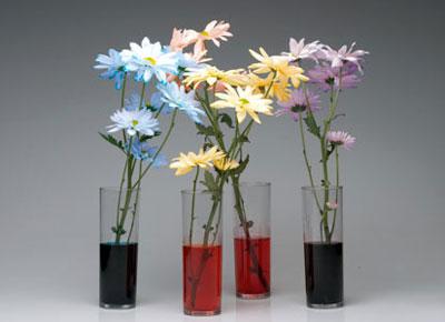 آموزش رنگ کردن گل طبیعی + عکس