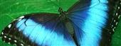 بال آبی پروانه در مبارزه با جعل کالا و اسکناس