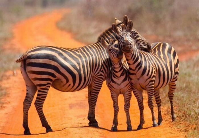 عکس های جالب حیوانات