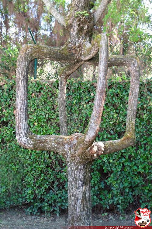 عکس عجیب ترین درختان جهان در این باغ