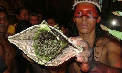 عجیب ترین آزمایش مردانگی جوانان در قبایل باغات آمازون