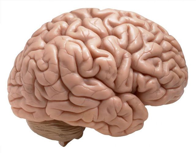 10 حقیقت جالب درباره مغز انسان