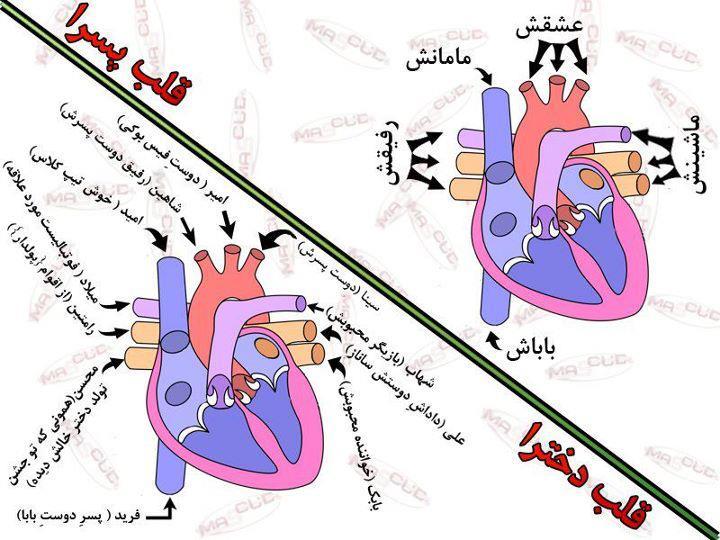 تفاوت قلب دخترا و پسرا!