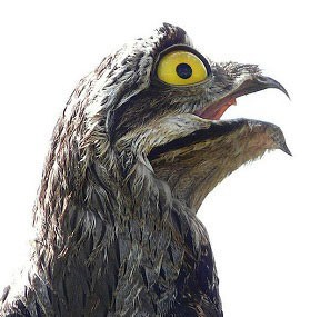 تصاویری از پرندهای بسیار زشت و ناشناخته