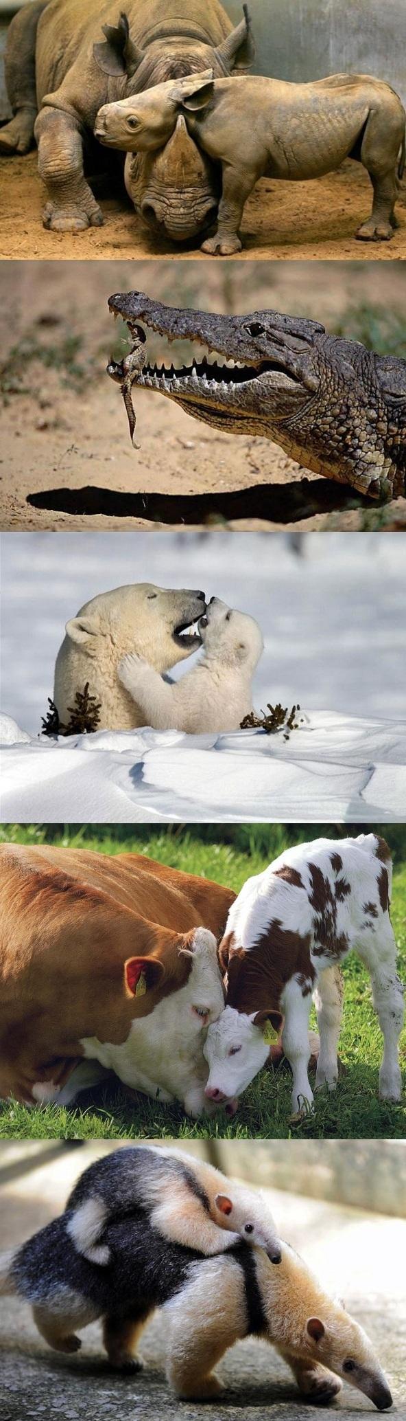 مادرانههای زیبا  /تصاویر