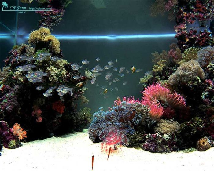 last_japanese_aquarium_01