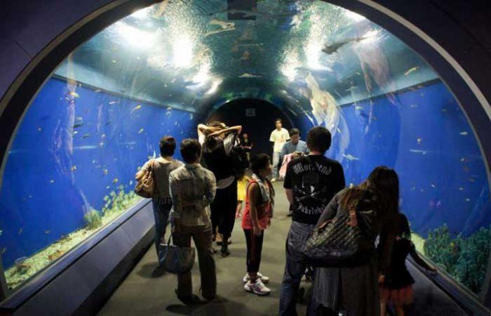 last_japanese_aquarium_03