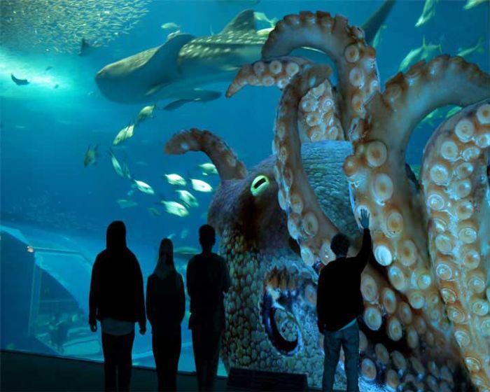 last_japanese_aquarium_05