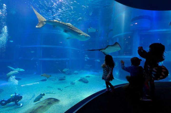 last_japanese_aquarium_06