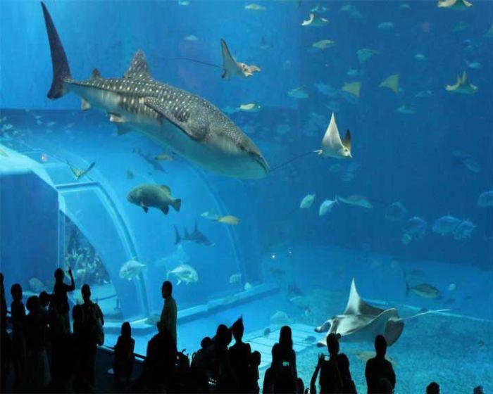 last_japanese_aquarium_08