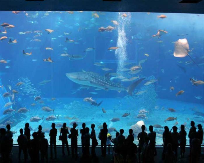 last_japanese_aquarium_09
