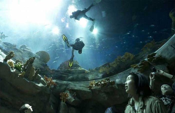last_japanese_aquarium_11