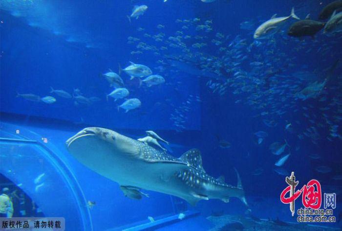 last_japanese_aquarium_12
