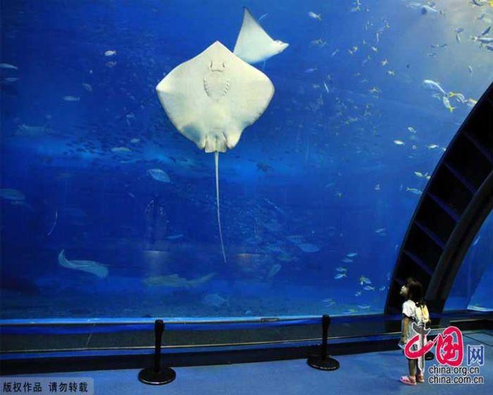 last_japanese_aquarium_13