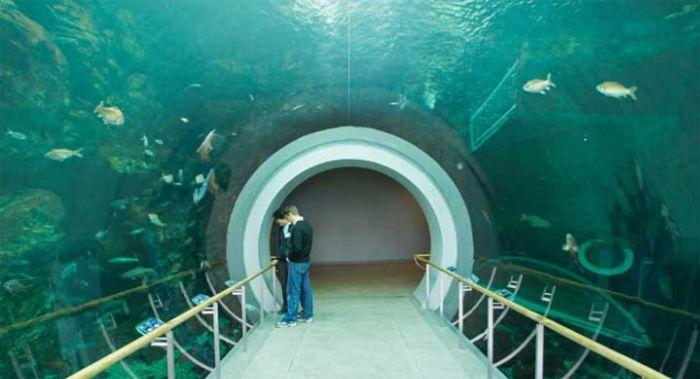 last_japanese_aquarium_15