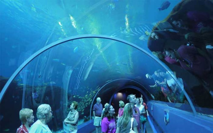 last_japanese_aquarium_17