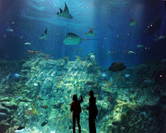 last_japanese_aquarium_18