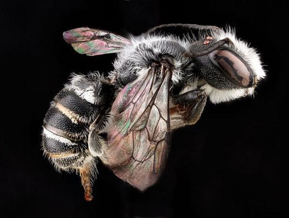 عکس هایی زیبا و دیدنی از حشرات