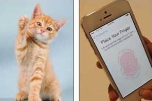 گربهای که از سد امنیتی آی فن ۵ اس گذشت