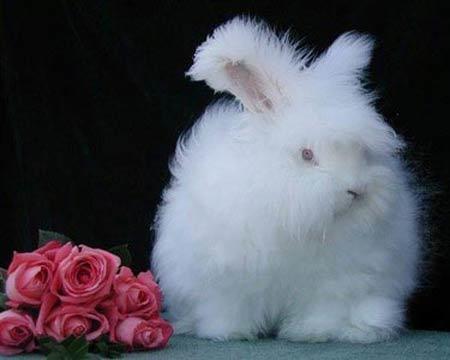 عجیب ترین خرگوش دنیا +تصاویر