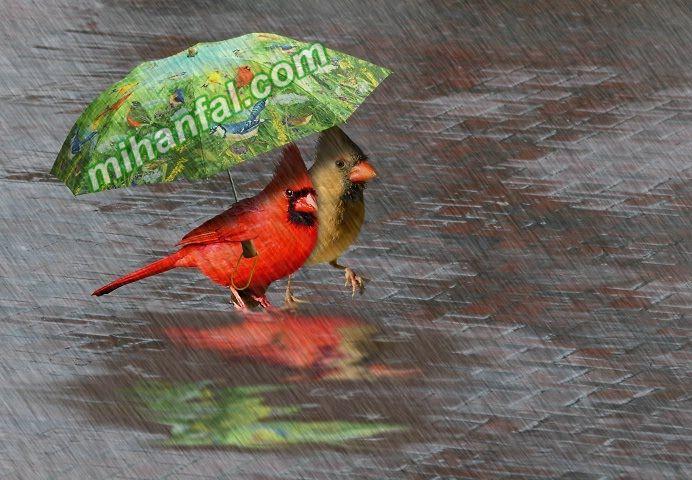 اس ام اس روزهای بارانی