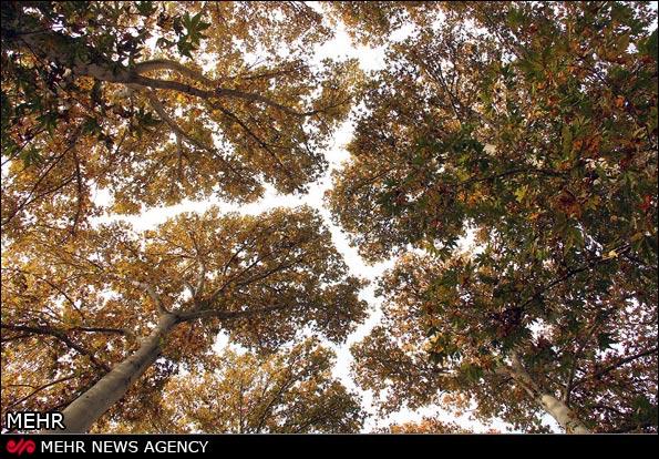 طبیعت زیبای پاییزی کرج /تصاویر