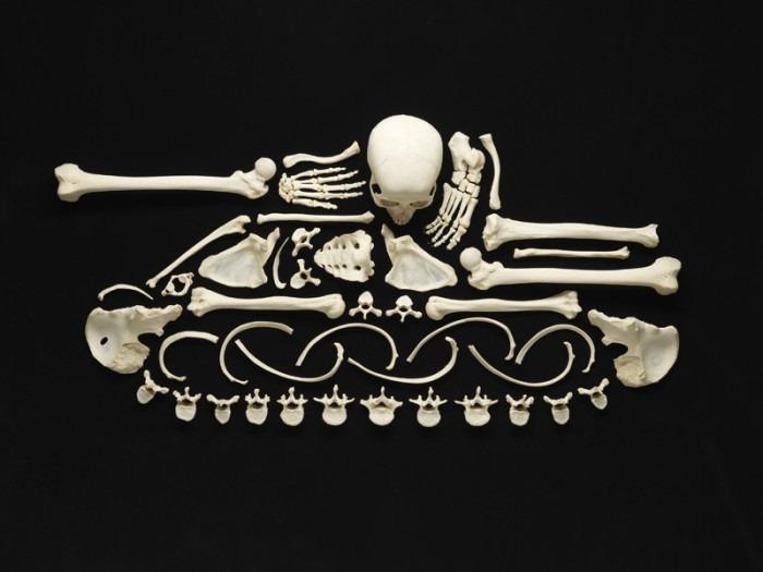 استخوان های جالب و دیدنی /تصاویر