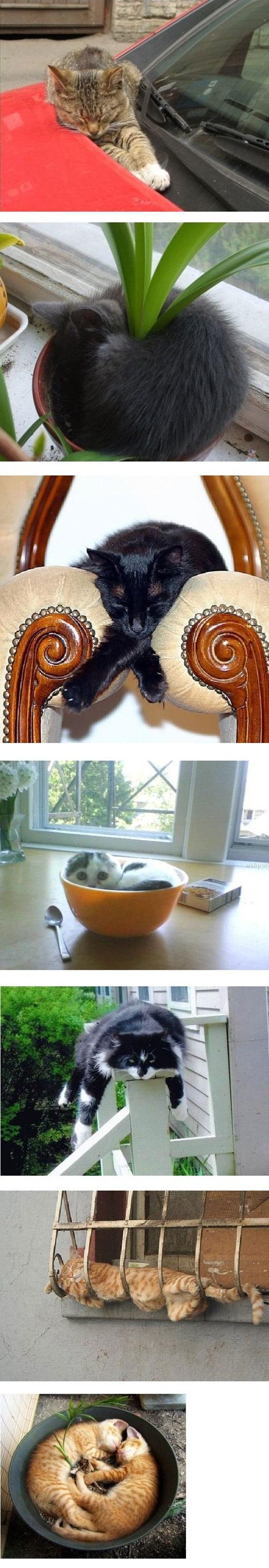 جایی برای خوابیدن! /تصاویر