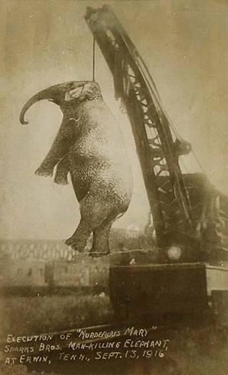 به دار آویختن فیل به جرم قتل! +عکس