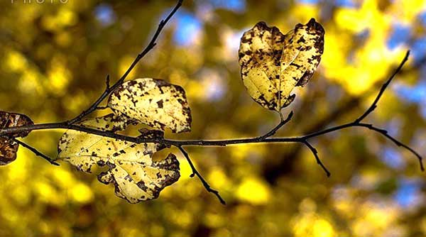 طبیعت پاییزی جنگل قرق +تصاویر