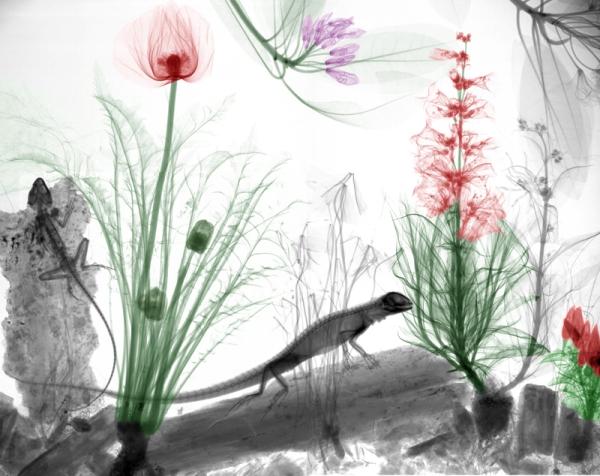نقاشی های جالب و دیدنی /تصاویر