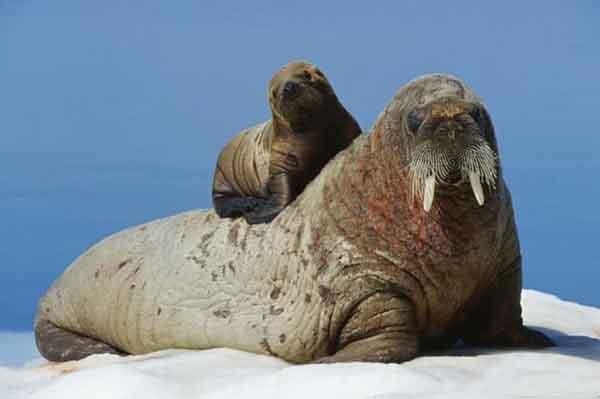 تصاویر زیبا از حس مادرانه در حیوانات